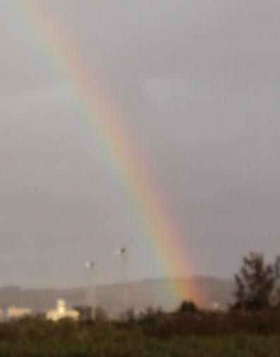 茶畑の向こうに虹