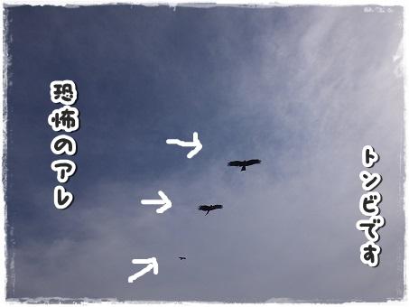 DSCF2245.jpg