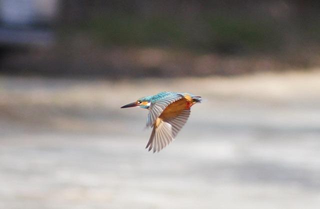 飛翔(20130113)1