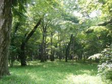 スピリチュアルに根っこをはやす-井の頭公園の朝