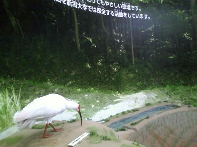 20121118kenkyuhapyokai.jpg
