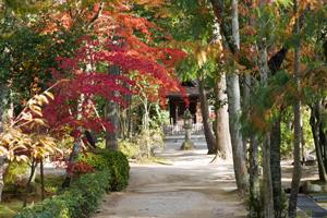 2014唐招提寺の紅葉