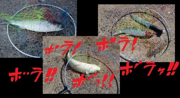 2330_convert_20110924120532.jpg