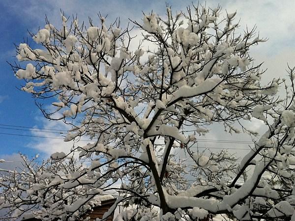 2月18日の雪