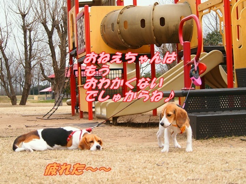 P4093243_20120410155114.jpg