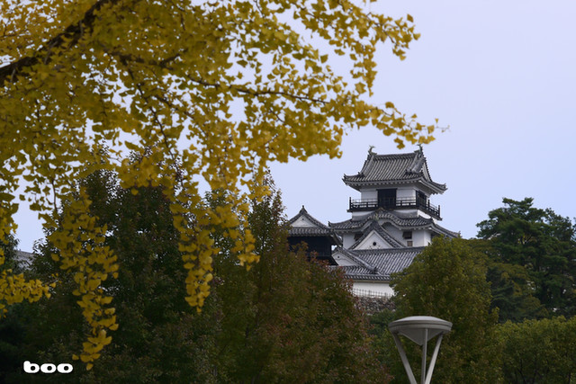 高知城に銀杏・西から