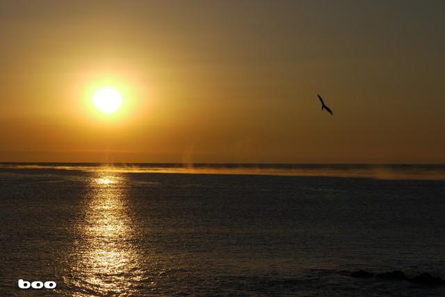 朝日のまわりを飛ぶ鷹