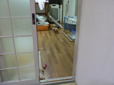 jp_convert_20111205113532.png