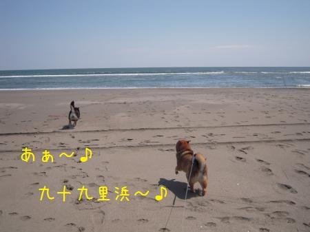 20120409-01.jpg