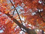町屋公園内 紅葉