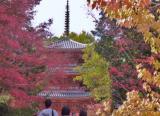 宝福寺 紅葉