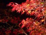 宝福寺のライトアップ