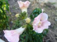 真冬 花が咲く 何の花