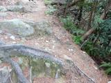 落ち松葉を踏みながら 滑らないように急坂道を登る。