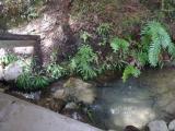 竜神二つ井戸 湧き水