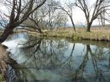 源流の水面に落葉樹が写し出される早春の風景 安曇野