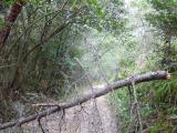 10時36分 登山道は倒木が多く 難所続き…