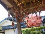 公園内 つるべ井戸に干し柿が干されていました。