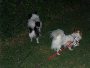 2012_0810フロントライン 犬歯0014