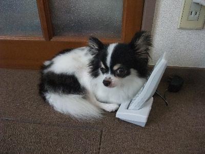2012_0910電話番犬0006