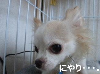 2012_1109乳歯 お腹0001