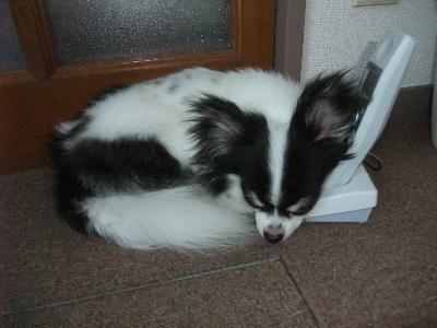 2012_0910電話番犬0008
