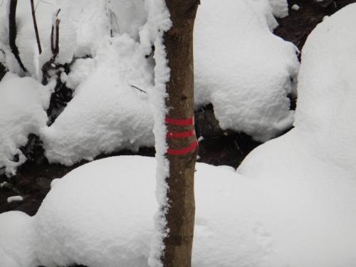 006_convert_20111231132350.jpg