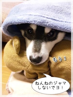 10_20120128031051.jpg