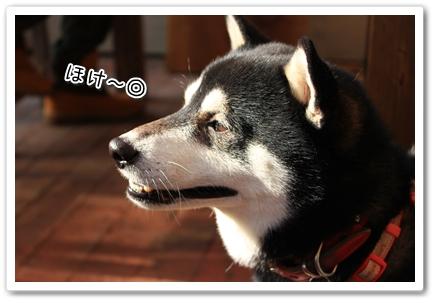 10_20120129182747.jpg