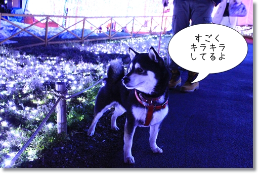 10_20120330084820.jpg