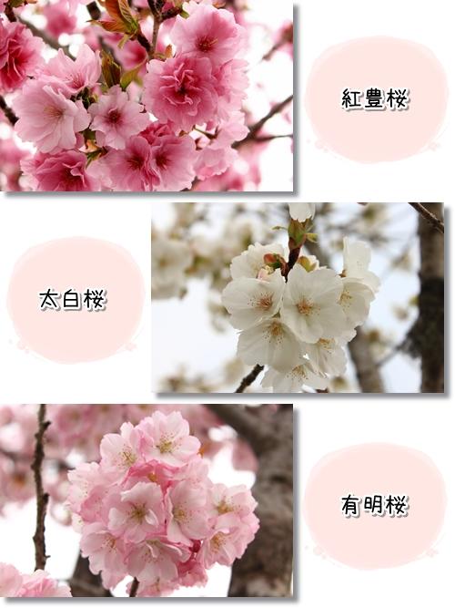 10_20120419015427.jpg