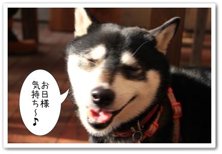 11_20120129182747.jpg