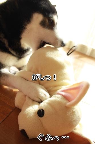 11_20120223013313.jpg