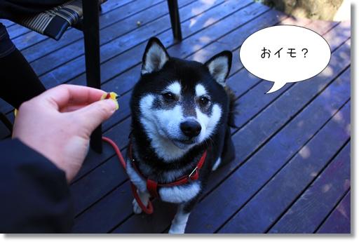 11_20120322015744.jpg