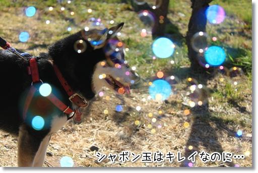 11_20120325011954.jpg