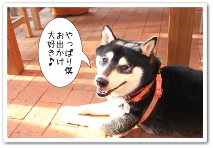 12_20120129182747.jpg
