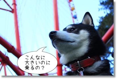 12_20120201025523.jpg