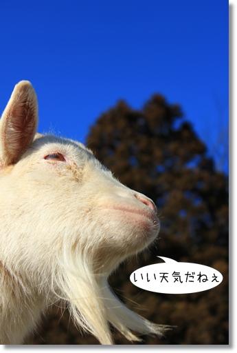 12_20120209153358.jpg