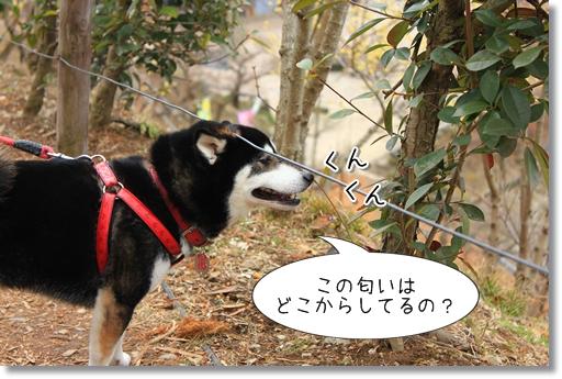 12_20120314032025.jpg