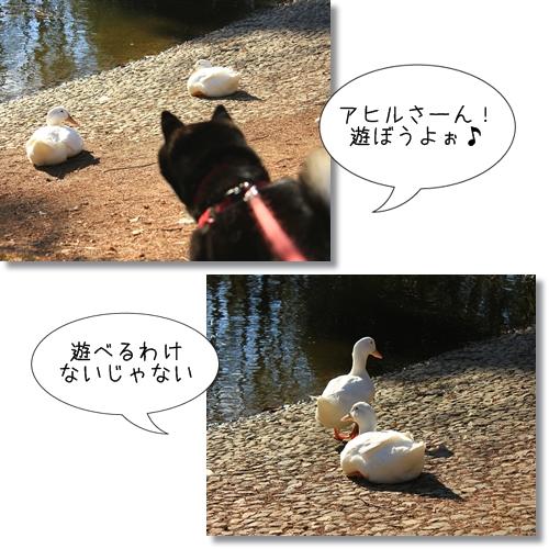 12_20120407024052.jpg