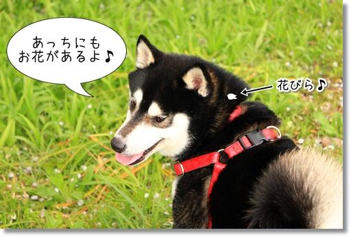 12_20120419015426.jpg
