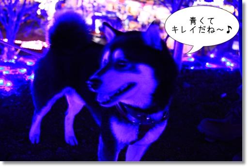 13_20120330090527.jpg