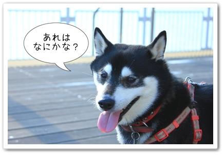 14_20120131134825.jpg