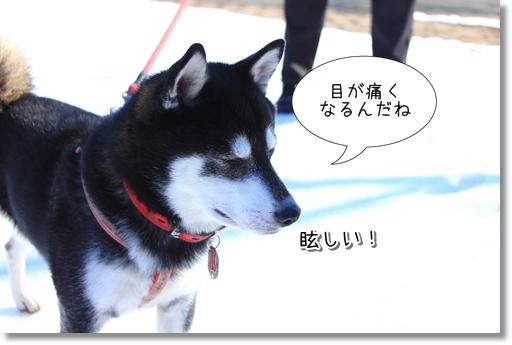 14_20120207035720.jpg