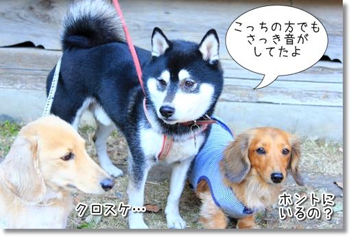 14_20120302164341.jpg