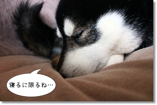 15_20120404002603.jpg