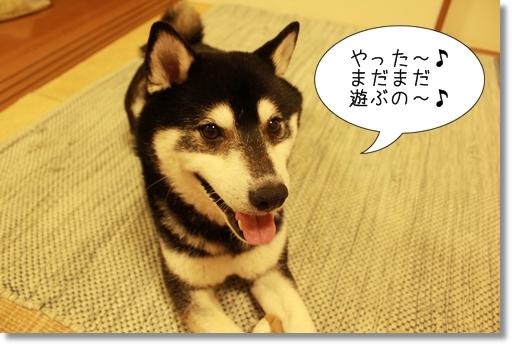 15_20120416041051.jpg