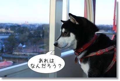 16_20120201030248.jpg