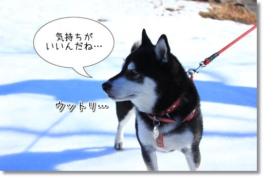 16_20120207035719.jpg