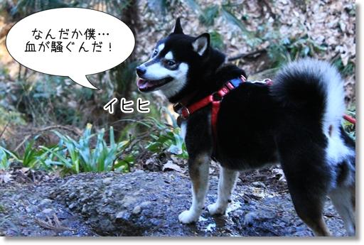 16_20120329031759.jpg